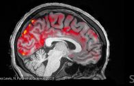 Blood-flows-out-and-cerebrospinal-fluid-flows-into-the-sleeping-brain-Science-News