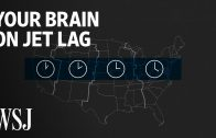 What Happens to Your Brain on Jet Lag | WSJ