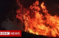 Australia fires: Climate change increases the risk of wildfires – BBC News